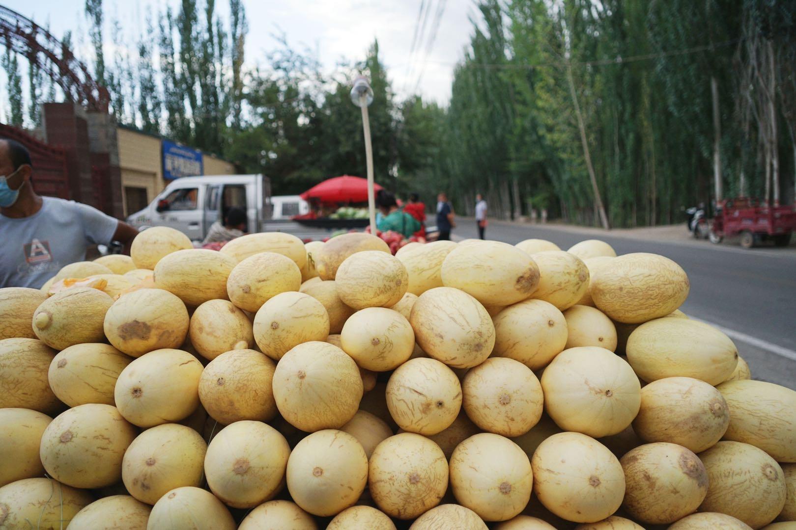 新疆的水果,留給鳥兒吃,也給過客吃