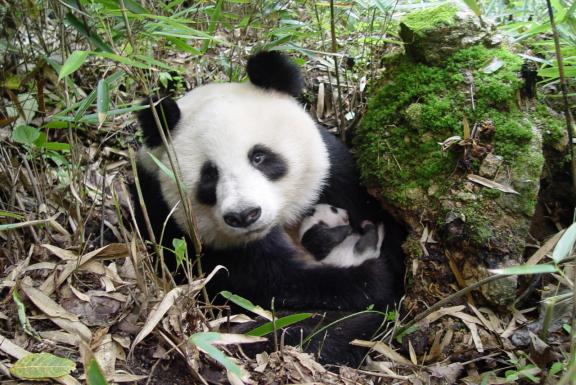 联合国生物多样性报告:十年前设立的20个目标,均未完全实现