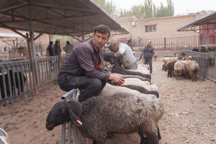 農牧民把牛羊帶來新疆喀什阿瓦提鄉的牛羊巴扎,尋求買家。(2)