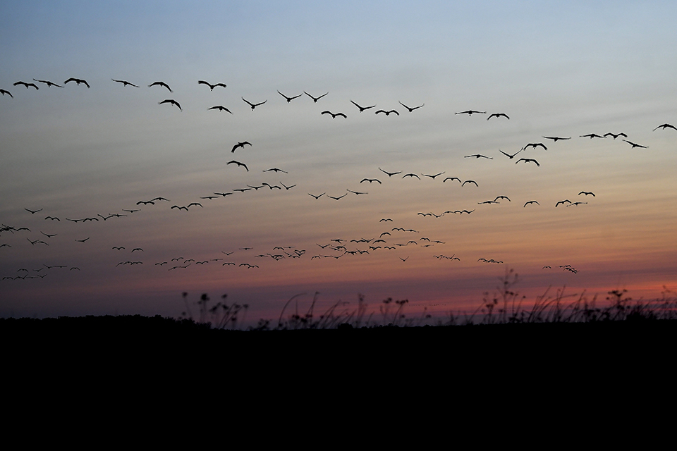 大批候鳥死亡,或與氣候變化有關
