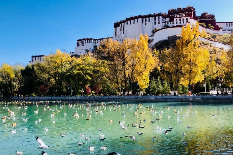 秋冬交替,布达拉宫脚下的宗角禄康公园内五彩斑斓。