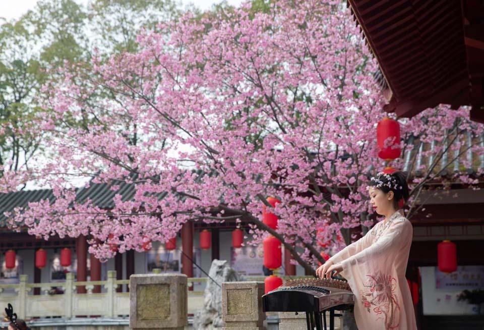 武汉东湖樱花园开园