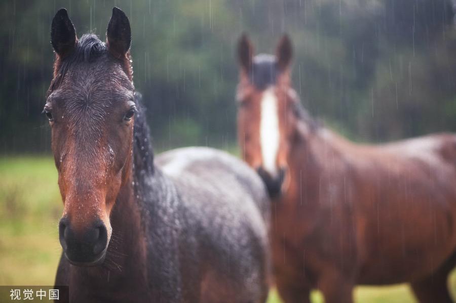 《邊地童話   暴雨下的馬群》(圖文無關)緊接著,雨就迫不及待地來了,不是循序漸進從小到大的那種,而是直接了當,嘩啦嘩啦就從上到下倒下來了。