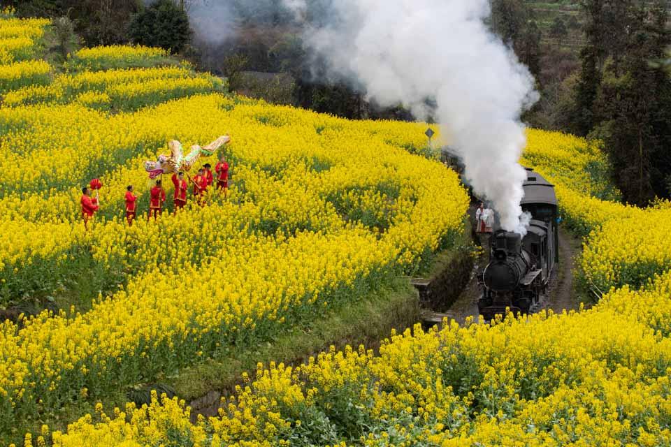 搭蒸汽火車穿梭油菜花田
