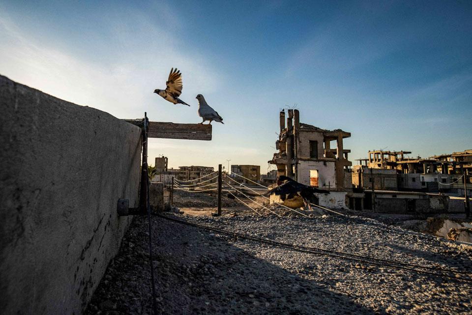 瞬间一周丨叙利亚天空仍有鸽子在飞