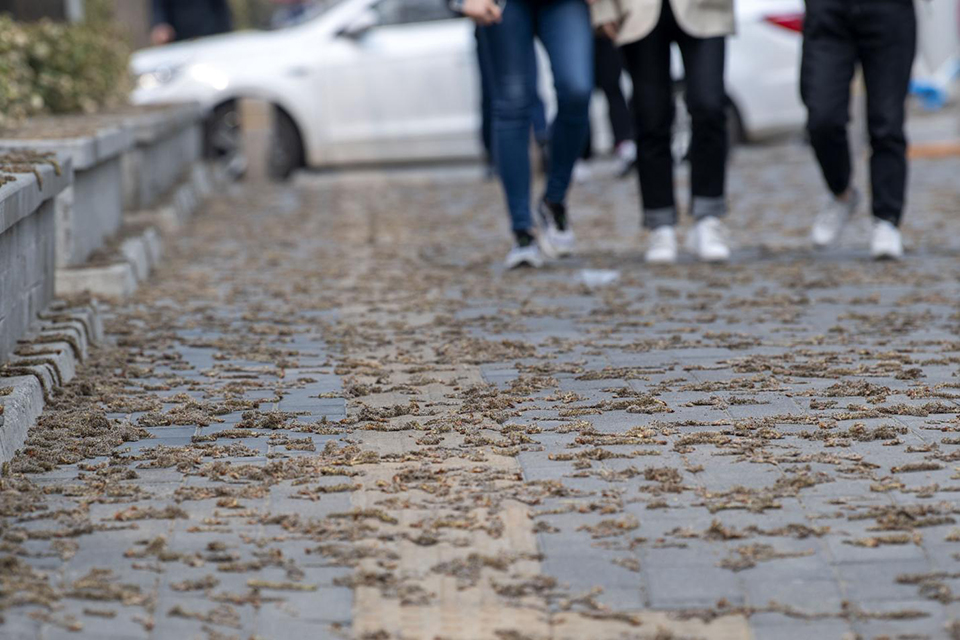 """多地上线花粉指数:给过敏的你一份""""生存指南"""