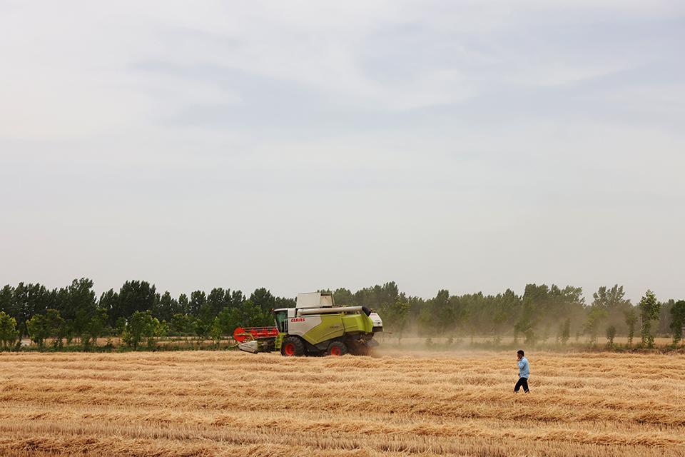 快評農民割麥子得噴水降塵?基層要改作風,考核也要更科學