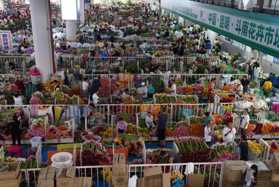 进入斗南花卉市场,鼻子闻到的全是沁人心脾的花香。