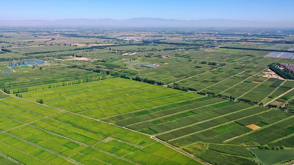 水稻种植带北移,是福是祸?