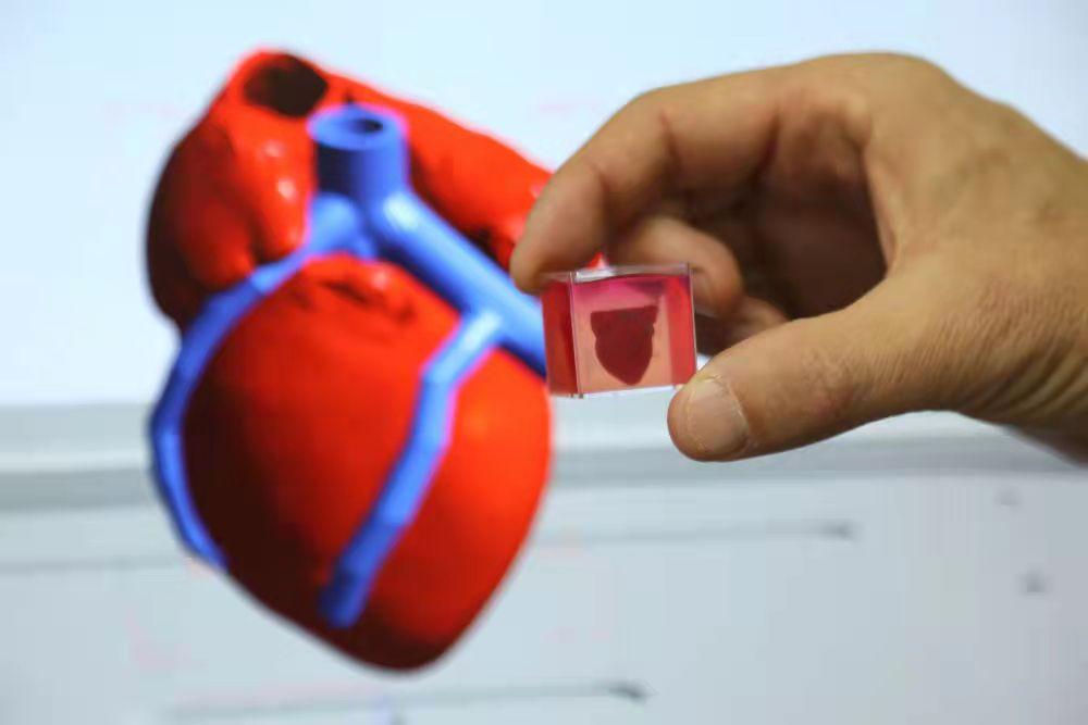 一名研究人员展示3D心脏