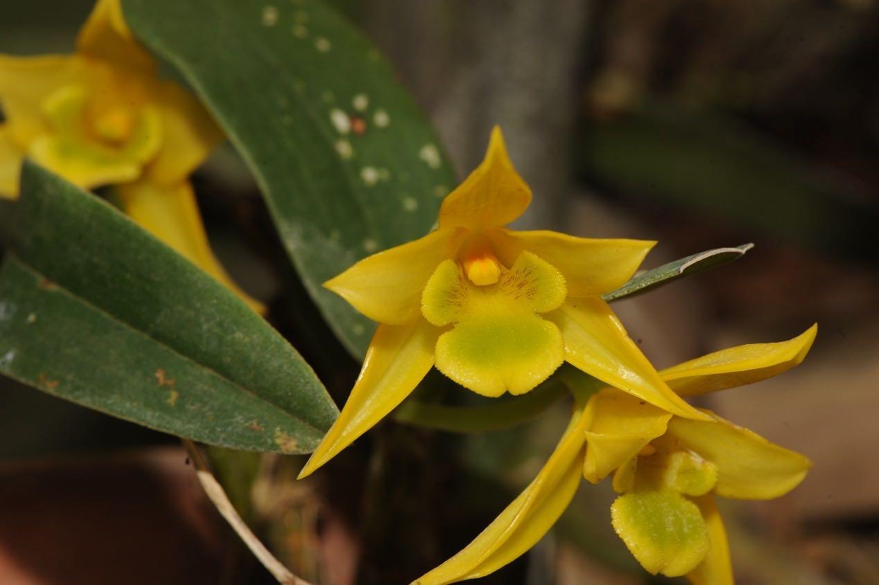 买卖网红植物小心了,它们可能被列入新版野生植物保护名录