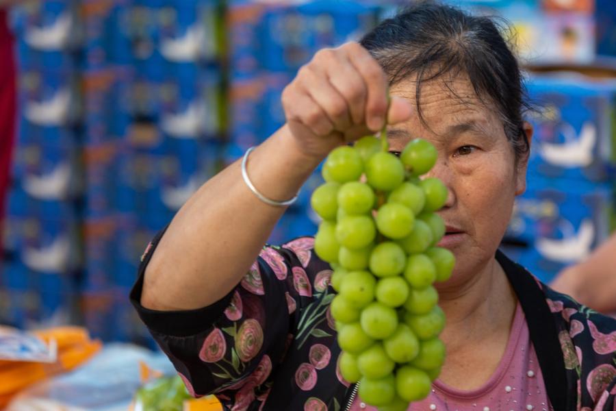 """《""""阳光玫瑰""""从奢侈品到走入寻常百姓家,中间发生了什么?》阳光玫瑰最初出现在国内的超市高档水果区,价格高达998元一串,让人咋舌、绕道而行,现在在一般一斤只需要15元。图为2021年9月22日,江苏涟水县保滩街道万福葡萄园今年种植的阳光玫瑰葡萄喜获丰收。园内一派忙碌景象。一串串葡萄经工人们采摘、分捡、包装,准备装车销往大城市。"""